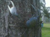 Tree Crabs!.jpg