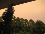 Yellow sky hitting the trees from after TS Nicole went by from 9-29-2010