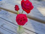Roses in Maine