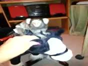 Monkey rides rocking pony