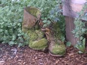Moss covered Boots
