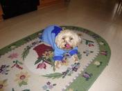 Gigi wearing her new Chanukah Sweater