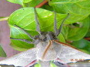 moth on a plant outside (different shot)
