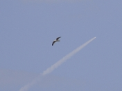 SHOT OF SPACE SHUTTLE DISCOVERY 2-24-11 WITH BIRD