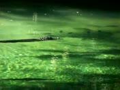 swimming gator