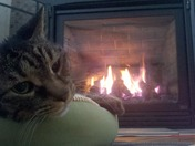 Cat warming up by the fire