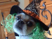 Daisy The Good Witch