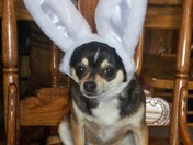 Spike The Easter Dog