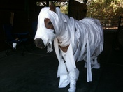 Amos the Wonder Horse's Halloween Costume