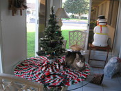 Clyde with his own Christmas Tree