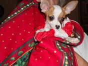 Christmas Angel Pet