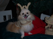 Presley's Christmas Picture