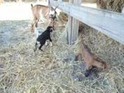 Two New Kids, Buck Ram & Platters