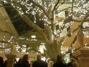 PMA Tree Lighting