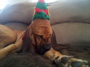 Lucyloo with her elf hat