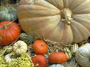 Ye 'Ol Pumpkin Patch