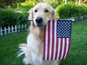 Patriotic Golden