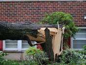Tree split in storm