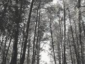 B/W Woodland Scene