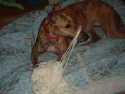 Daisy and her yarn