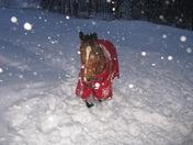 Gunnar in the big snow Feb 2010