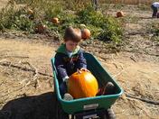 fall festival at flinchbaugh orchard