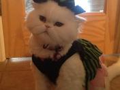 Bella's Halloween Costume 2012