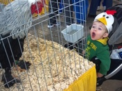 This was a farmshow.picture we thought u might like to share