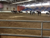 In the ring Thursday for the Draft Horse Pleasure Show