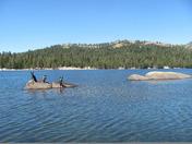 lodi,Luke and Leo Wolf at lake Alpine