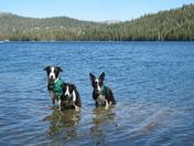 My dogs at lake alpine