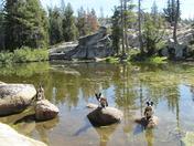 Lodi,Leo Wolf and Luke...on the rocks