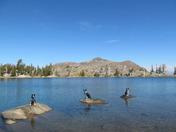 Lodi ,Leo Wolf and Luke at Frog Lake