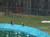 Pools Open!!