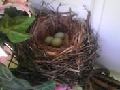 Bird nesting in wreath hanging on front door