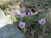 spring 002.JPG