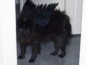 Halloween Costume/Black Shadow