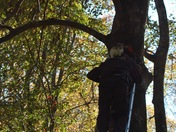 Clemson university to the rescue (cat up a tree)