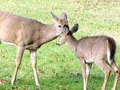 spike buck and friend