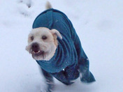 Baxter running in his feece snow suit