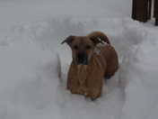 Champ in the snow storm