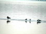 Susquehanna River Birds
