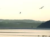 Birds on the Susquehanna