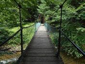 Cook Forest Swinging Bridge