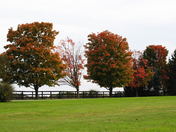 Fall colors horse farm