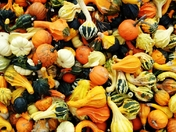 Fall Squashes!