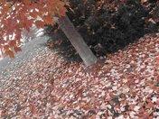 A Little Corner of Fall