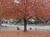 Autumn Covering