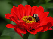 Bee In The Flower.