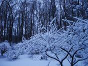 snow.2.9.13c.jpg